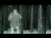 Theraflu - Firewood